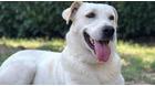 Dog sitter per accompagnare il tuo cane nelle passeggiate. Assicurazione e rimborso veterinario.
