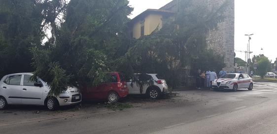 Maltempo, il vento provoca danni e disagi: albero secolare cade su auto in sosta