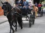 """A giro in centro storico su una carrozza trainata da cavalli. I 5 Stelle: """"Il Comune lo vieti"""""""