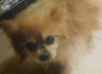 Botte e maltrattamenti al cane, donna denunciata. L'animale sequestrato e affidato a una famiglia