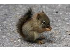 Una convenzione per soccorrere e curare ricci, scoiattoli, anatre e ghiri in difficoltà