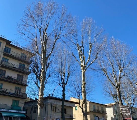 Via Firenze, iniziati gli interventi di potatura straordinaria