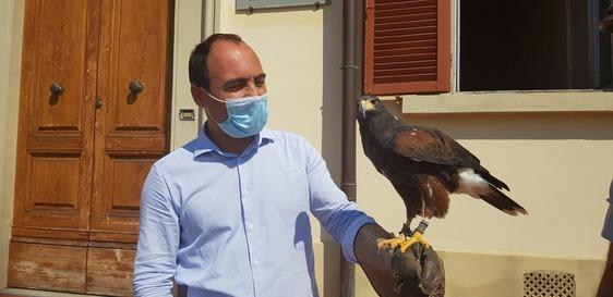 """Troppi piccioni, il Comune di Montemurlo ha """"assunto"""" Lady per risolvere il problema"""