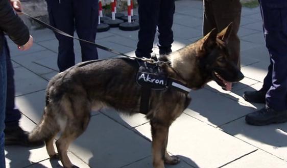 Cinofili e Polizia municipale in lutto per la morte del cane Akron