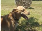 Bocconi avvelenati a Paperino: ucciso cane di 4 anni